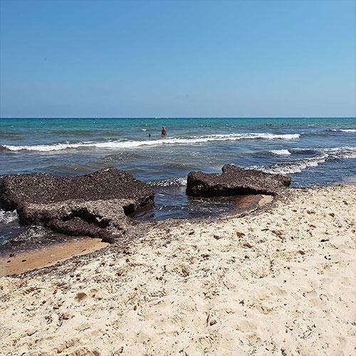 Есть ли водоросли на пляжах в Тунисе