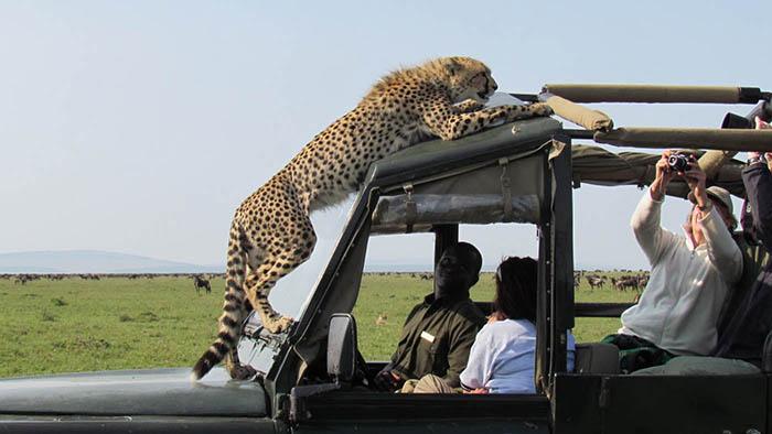 Сафари тур танзания занзибар