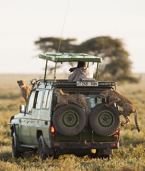 Джип-сафари в Танзании