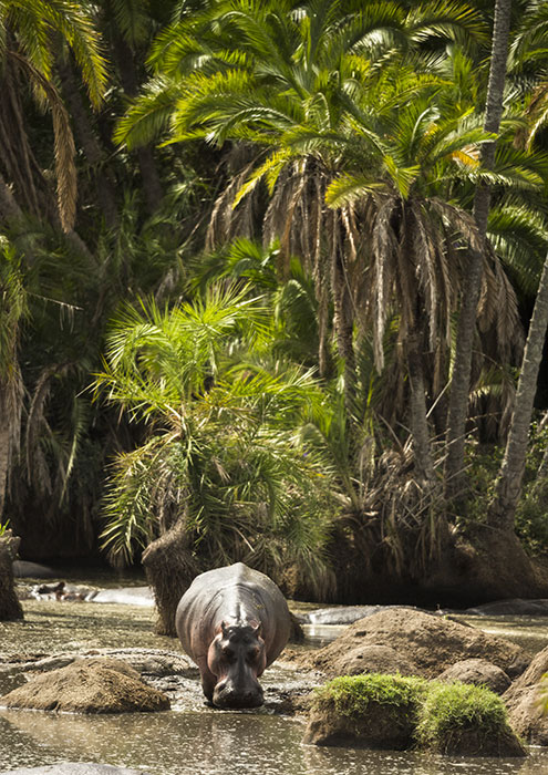 Южные парки Танзании. Сафари-туры.
