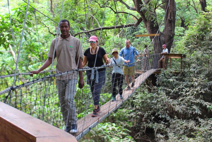 Навесная дорожка в Национальном парке в Танзании