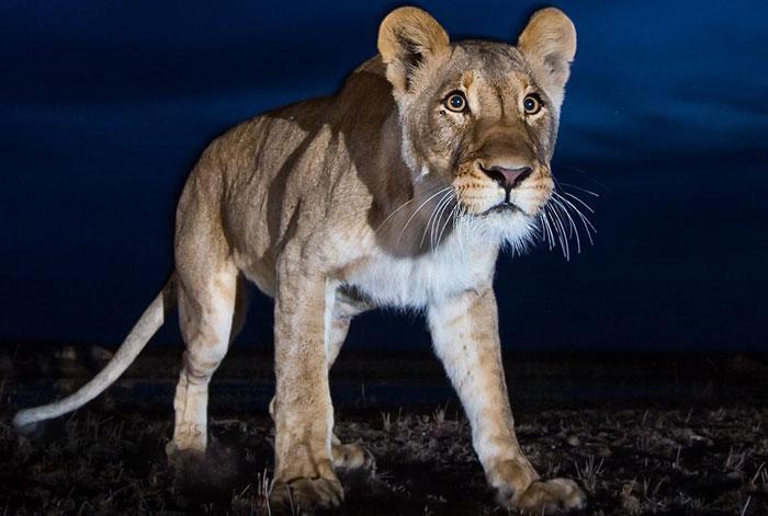 Ночное сафари по национальным паркам Танзании