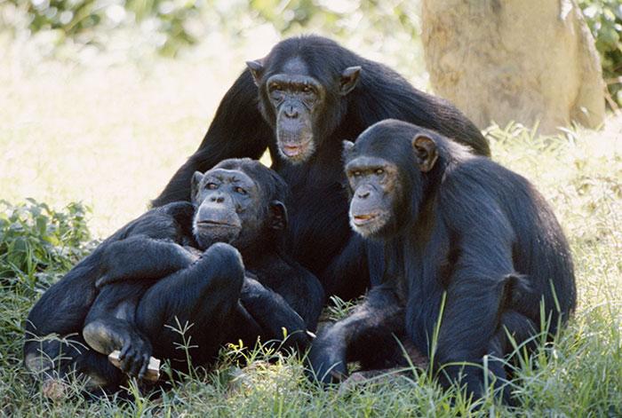 Животные в национальных парках Танзании