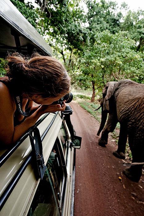 Правила посещения национальных парков Танзании