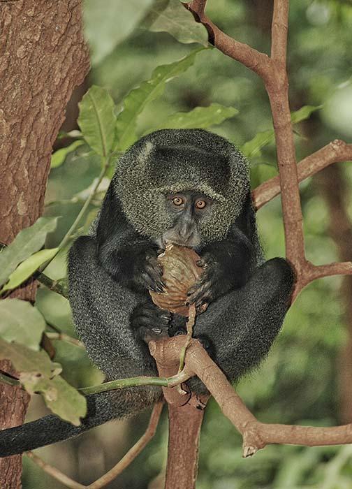 Чего нельзя делать в национальных парках Танзании