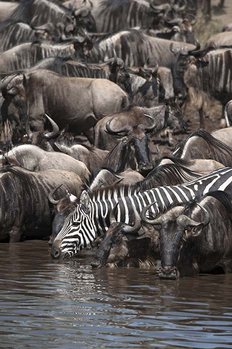 Танзания, западные парки, как посетить