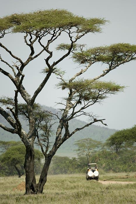 Национальные парки западной части Танзании, карта и описание