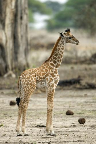 Сафари в национальных парках и заповедниках, Танзания, Занзибар